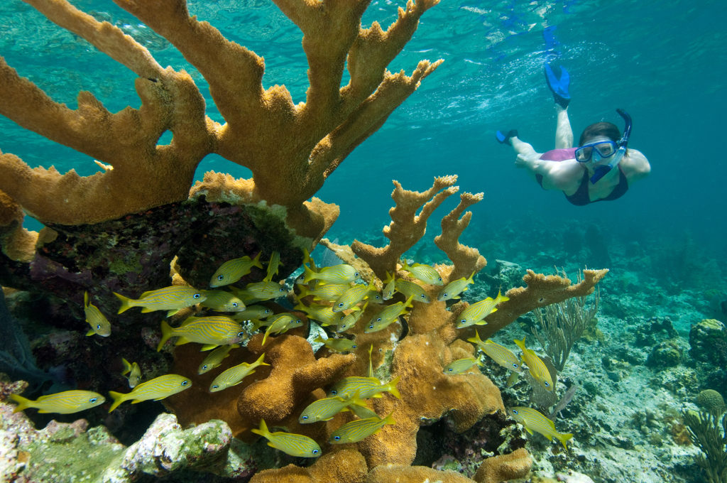 Kayak, Hike and Snorkel Adventures  with Virgin Islands Ecotours on St. Thomas and St. John