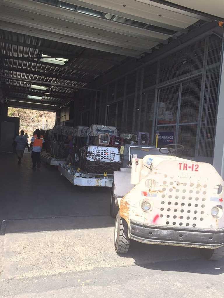 Animal Evacuation On St Maarten