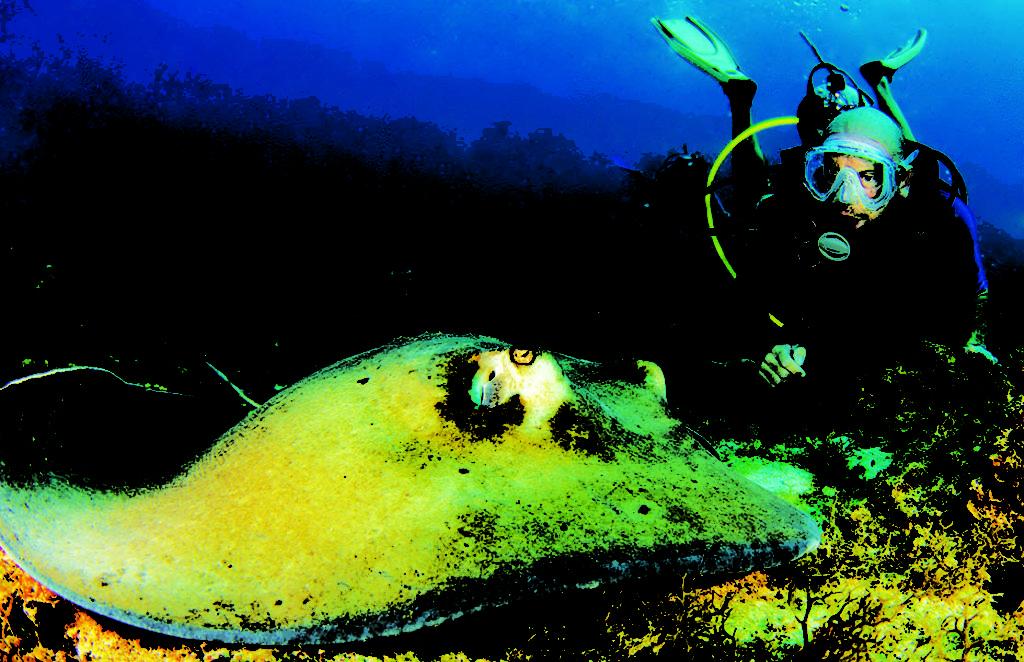 St. Thomas Diving Club