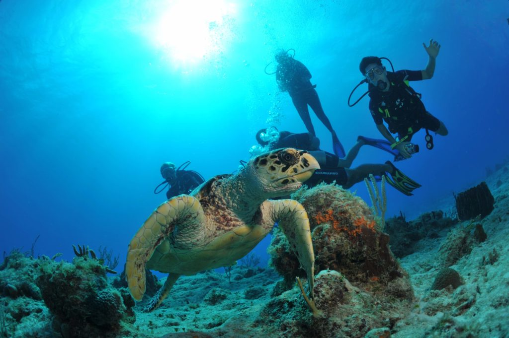 Fulfilling Underwater Dreams in St Martin