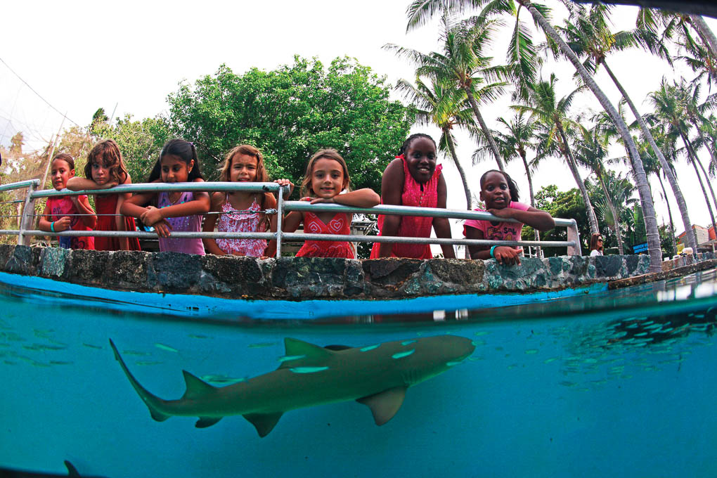 Coral World Ocean Park | great family activities on St. Thomas US Virgin Islands