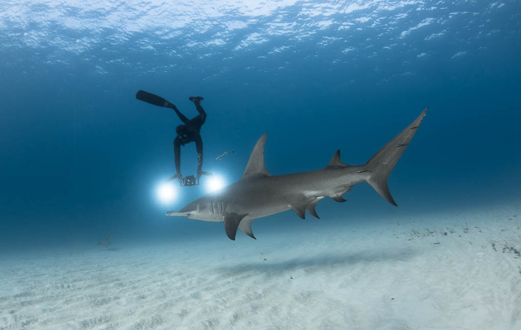 Diving with sharks in The Bahamas | Andre Musgrove