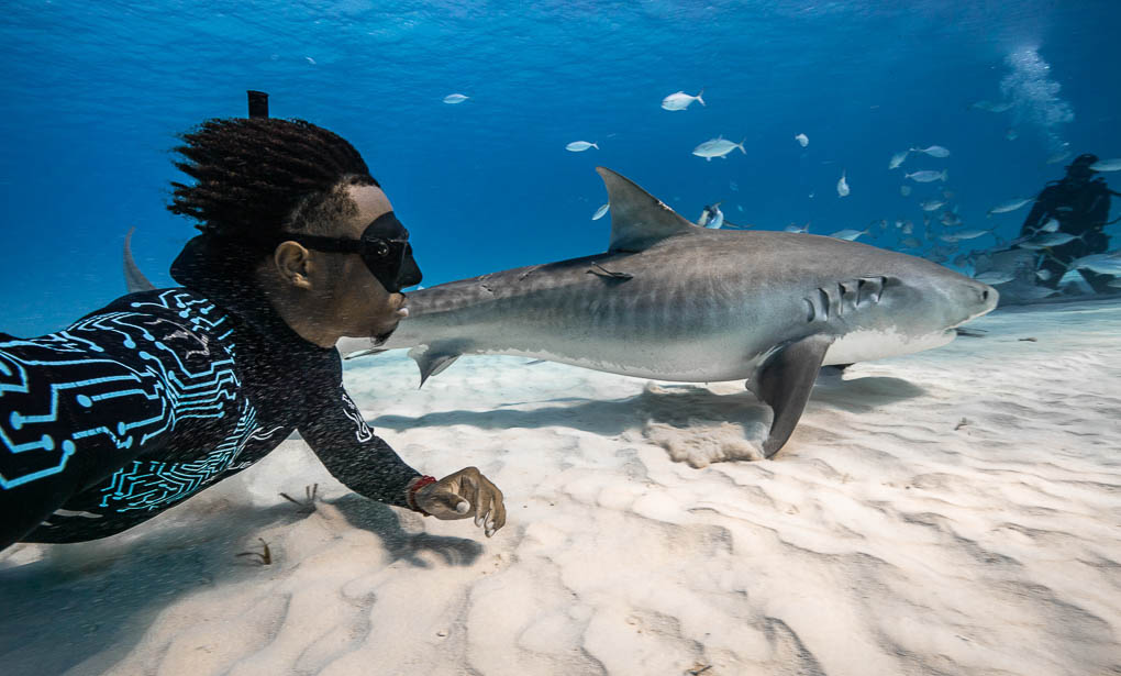 Diving with sharks | Andre Musgrove