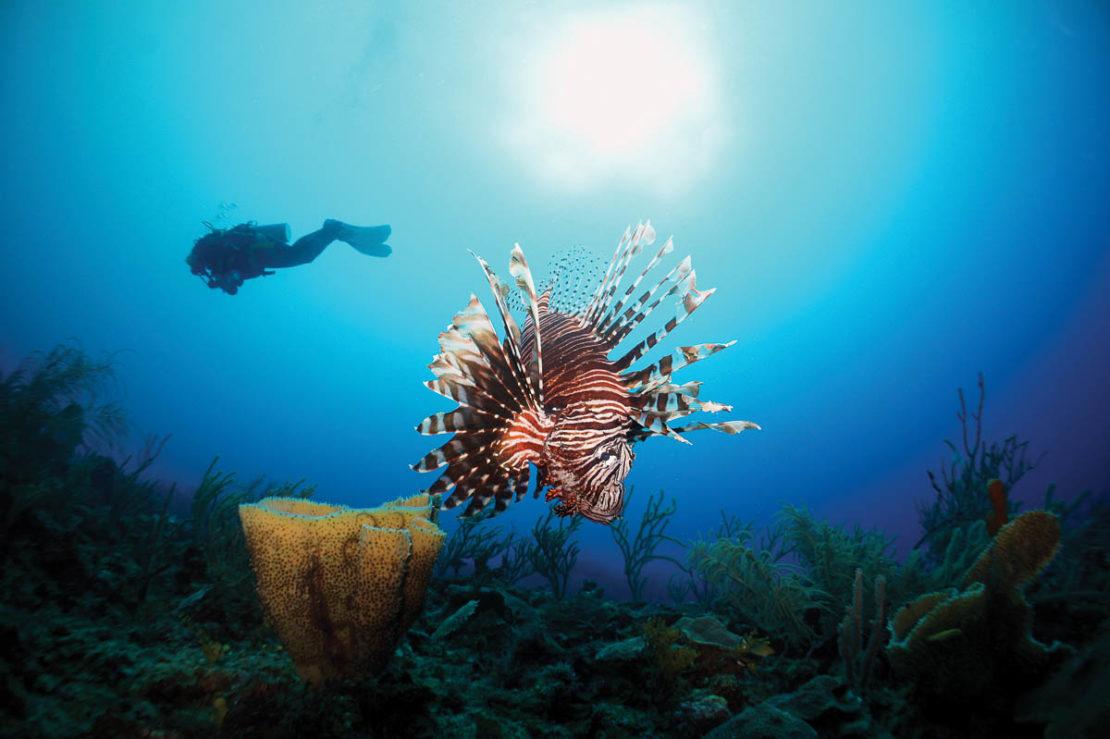 st maarten scuba diving