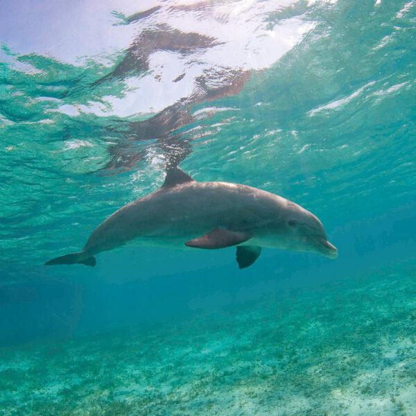 JoJo the Dophin