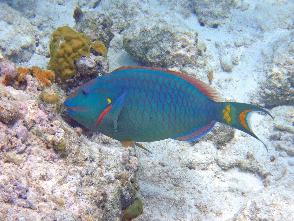 Best snorkeling and driving in St Maarten